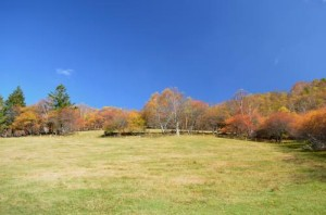 入笠牧場の紅葉