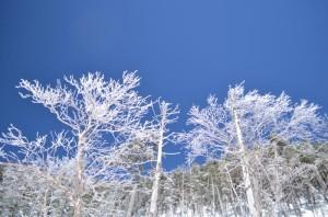 北横岳への登り。白くコーティングされた木々。