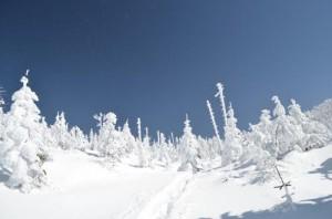 八ヶ岳縞枯山の雪