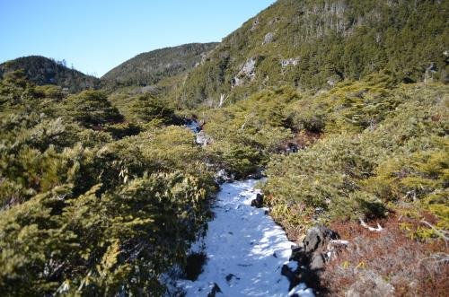北八ヶ岳の坪庭