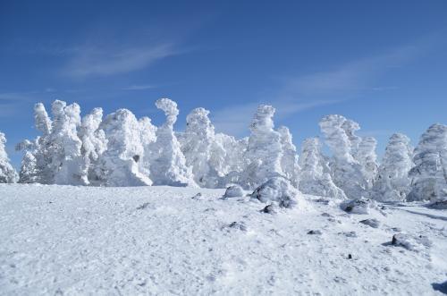 北横岳北峰の樹氷