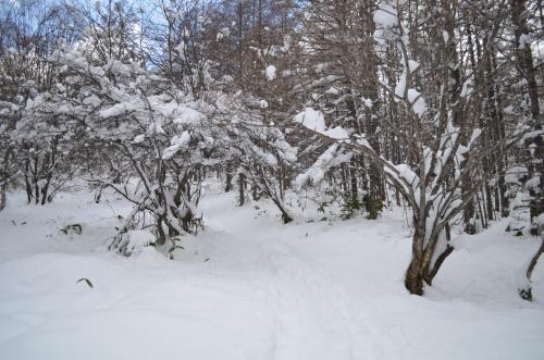 八子ヶ峰へ登る樹林帯の様子