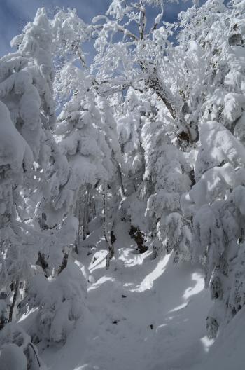 北横岳への登山道