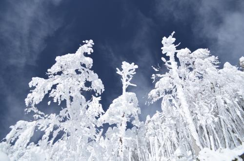 北八ヶ岳 樹氷