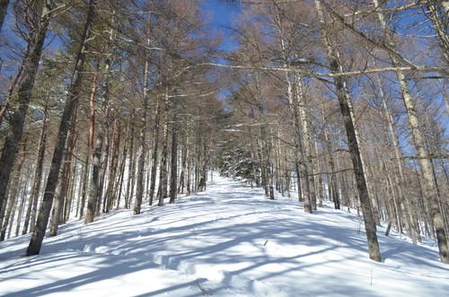 守屋山立石コース最後の尾根上の道