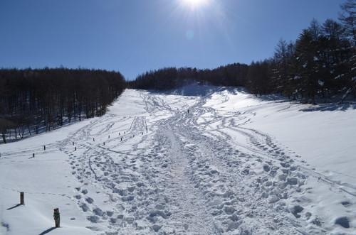 入笠山の広い雪の斜面