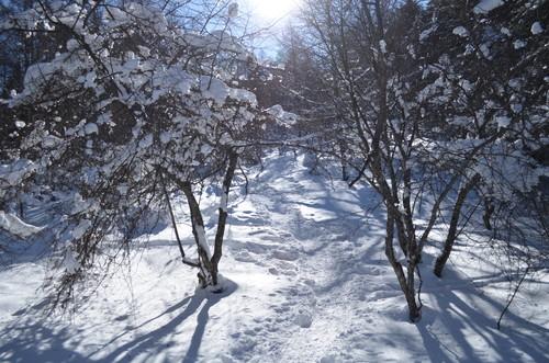 入笠山の登りの景色