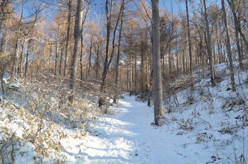 八ヶ岳西岳登山道入口付近