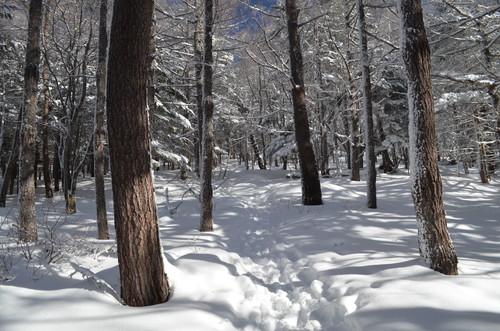 八ヶ岳西岳登山道の樹林帯