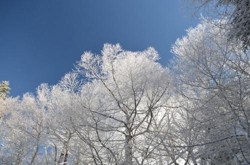 八ヶ岳西岳での霧氷
