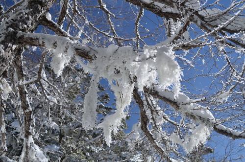 八ヶ岳西岳の雪の造形