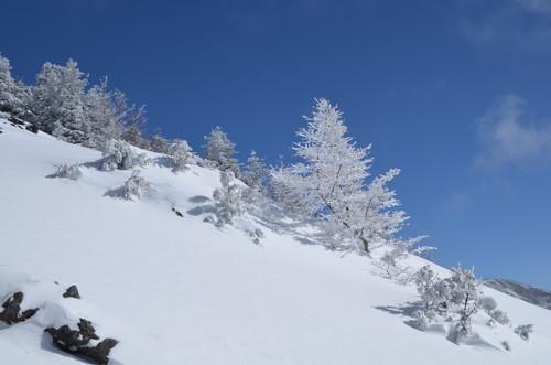 八ヶ岳西岳登山道の霧氷