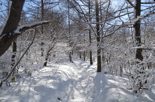 飯盛山への登り(樹林帯1)