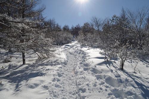 飯盛山への登り(樹林帯2)