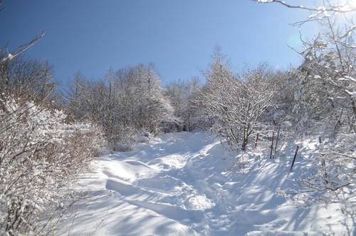 飯盛山への登り(樹林帯3)