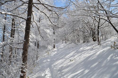 飯盛山への登り(樹林帯4)