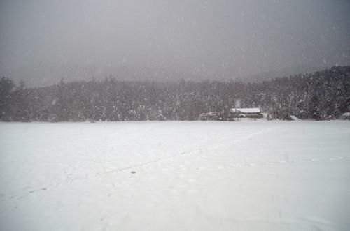 雪降る白駒池