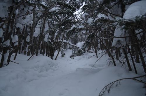 茶臼山の登りの倒木