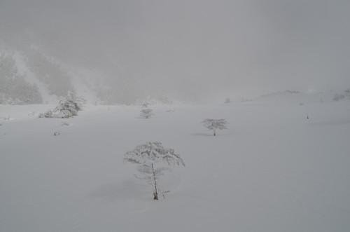 八ヶ岳坪庭 霧に包まれる