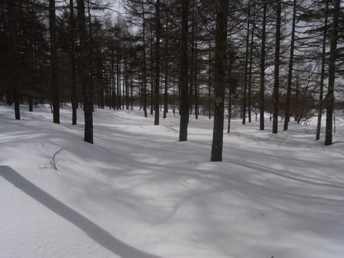 霧ヶ峰スキー場横の林