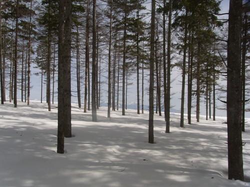 木立の奥に八ヶ岳