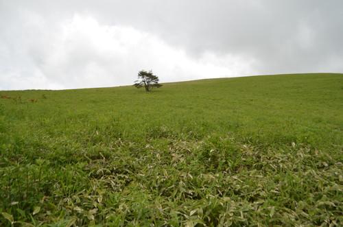 草原が広がる霧ヶ峰