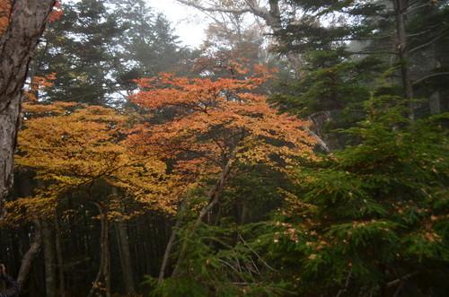 編笠山の紅葉