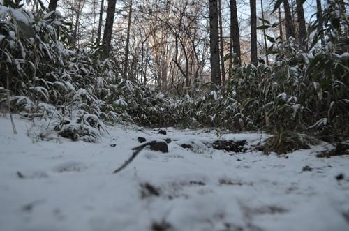 うっすら積雪の登山道