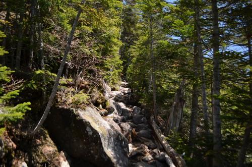 北横岳登山道の様子
