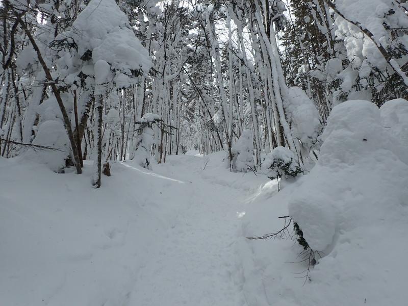 雪たっぷりの縞枯山