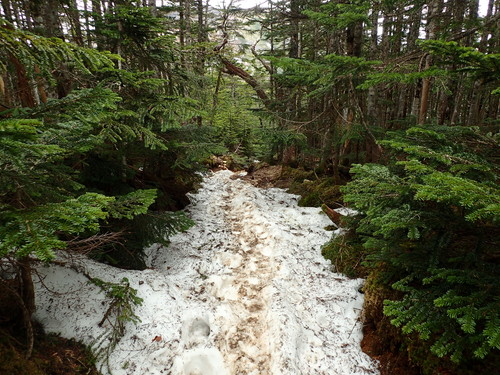 箕冠山残雪残る登山道