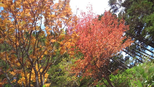 雌池の紅葉する木