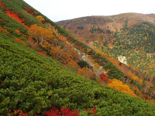 藪沢両岸の紅葉