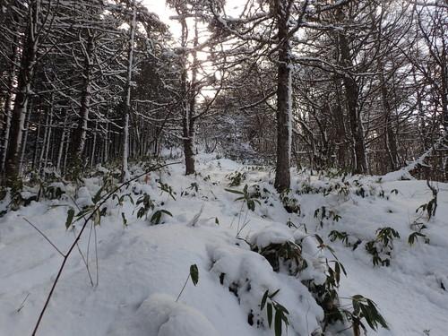 入笠山樹林帯