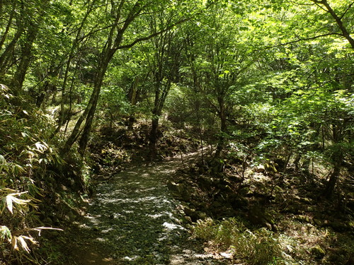大菩薩嶺の樹林帯