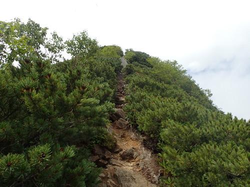 高嶺の登り