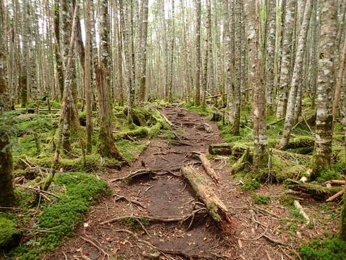 唐沢鉱泉から上がったコケの森