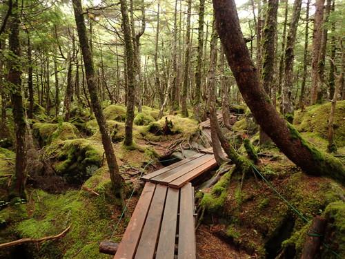 白駒池の登山道