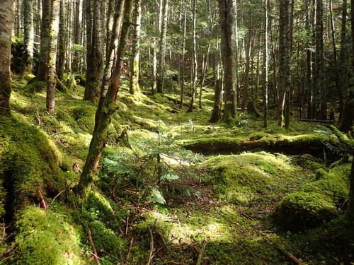 コケの樹林帯
