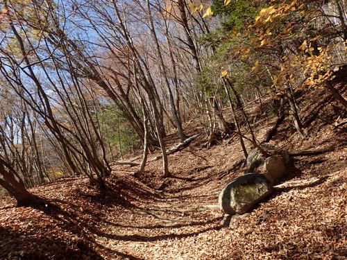 紅葉の終わった樹林帯
