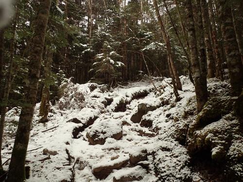 渋の湯近くの登山道