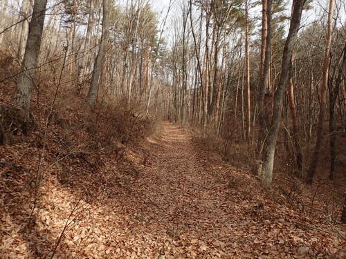 登山口付近の樹林帯