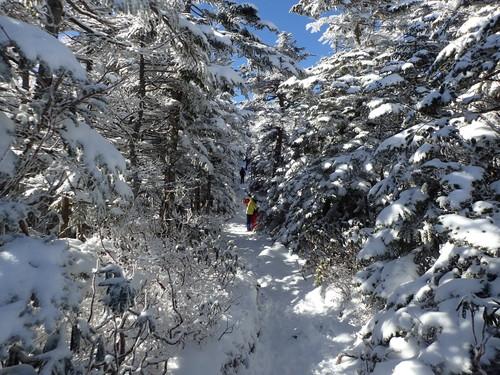 雪の樹林帯