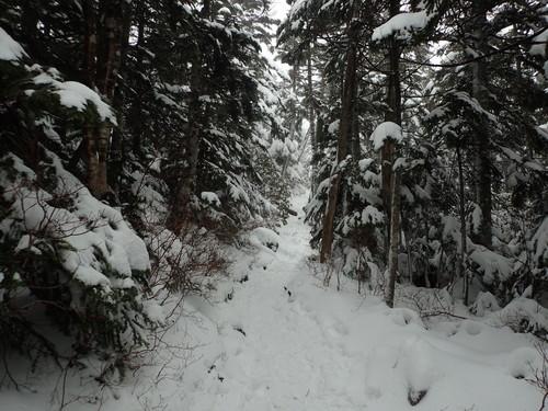 雰囲気のよい樹林帯