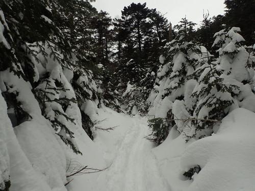 夏沢峠手前の樹林帯