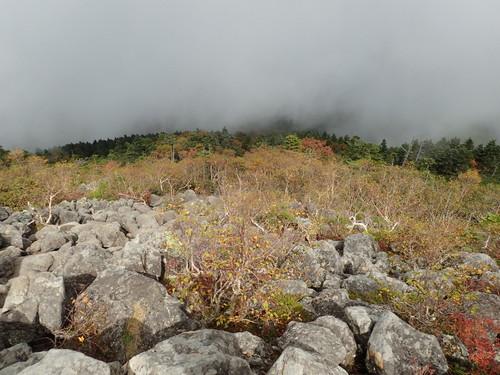 紅葉する森林限界付近