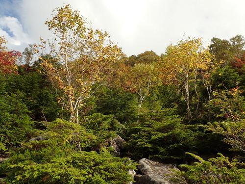 天狗の露地付近の紅葉